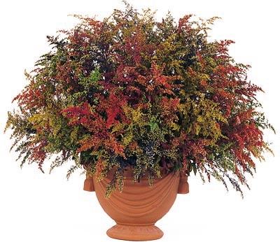 Flower arrangement Solidago
